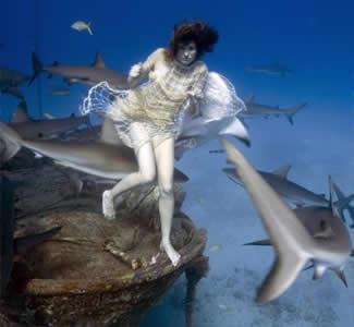 Reader's Choice: Top Ten UnderwaterTimes.com Articles Read in 2006