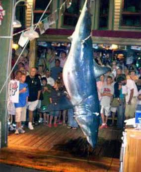 Underwater times americas newswire for Destin shark fishing