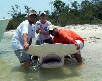 Hammerhead Shark Caught | Underwatertimes Com 750 Lb Hammerhead Shark Caught Off Florida