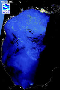 sargassum from space