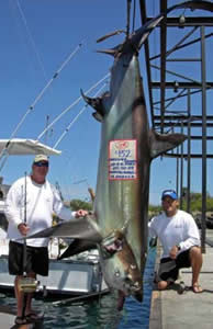 world record threher shark