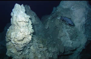 Lost City hydrothermal vent