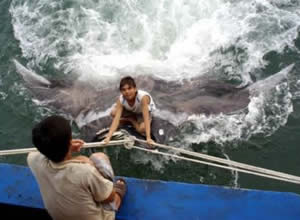 giant manta ray chinese fisherman