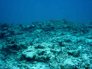 coral rubble bleaching