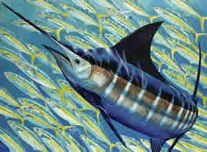 guy harvey blue runner
