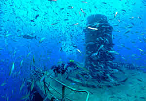 schooling_fish_vandenberg_key_west