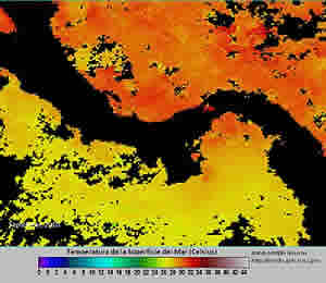 sea surface temperature 2010
