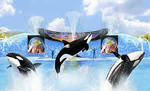 seaworld one world orca trainer