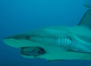 underwatertimescom group trophy hunters devastating