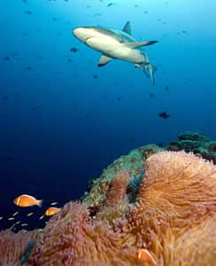 shark reef diving tourism