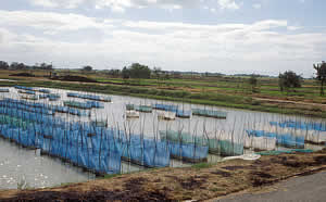 thailand_fish_farm