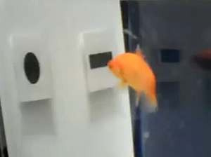 train goldfish recognize objects
