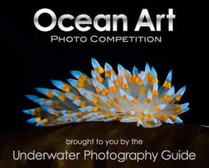 ocean art photo competition