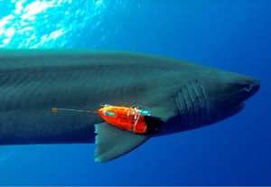 shark flight data recorder